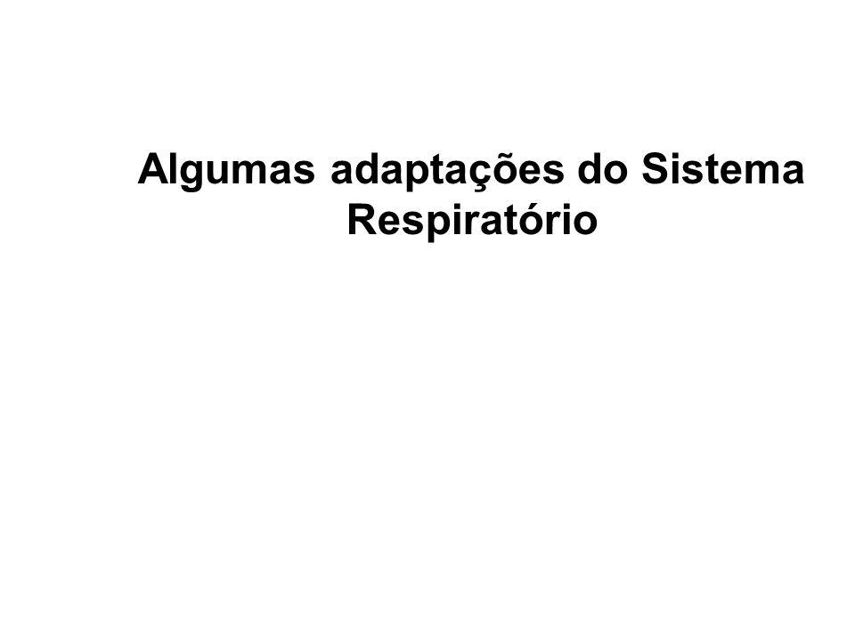 Algumas adaptações do Sistema Respiratório