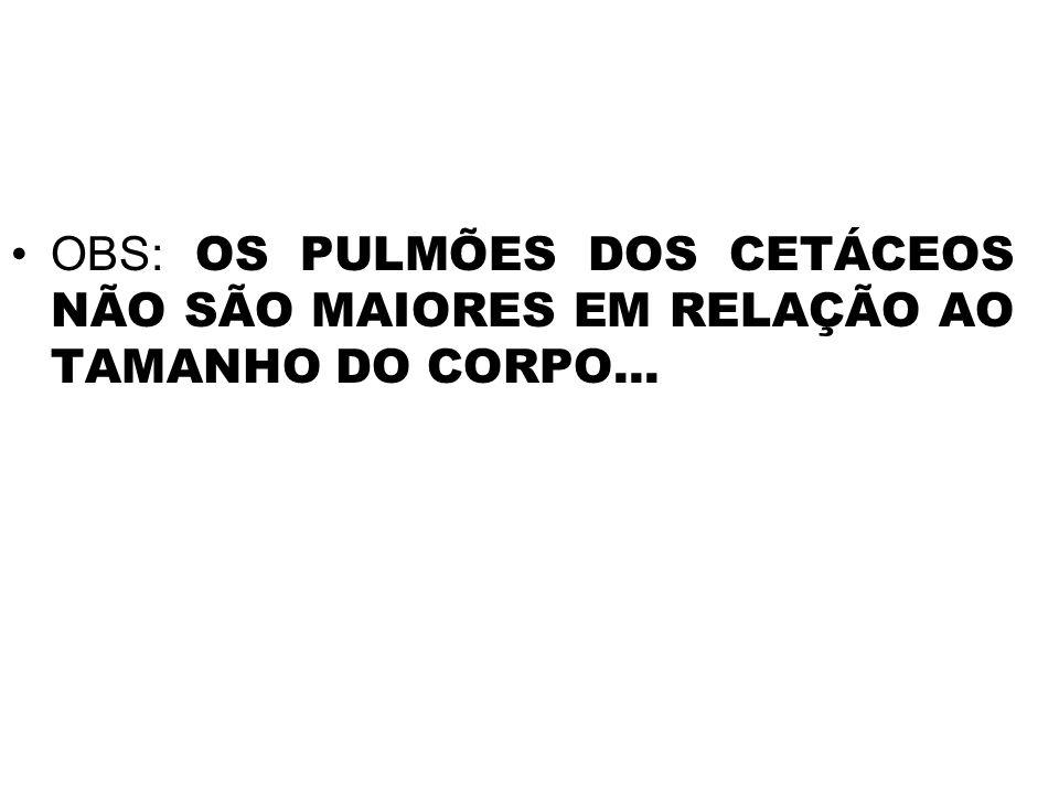 OBS: OS PULMÕES DOS CETÁCEOS NÃO SÃO MAIORES EM RELAÇÃO AO TAMANHO DO CORPO...
