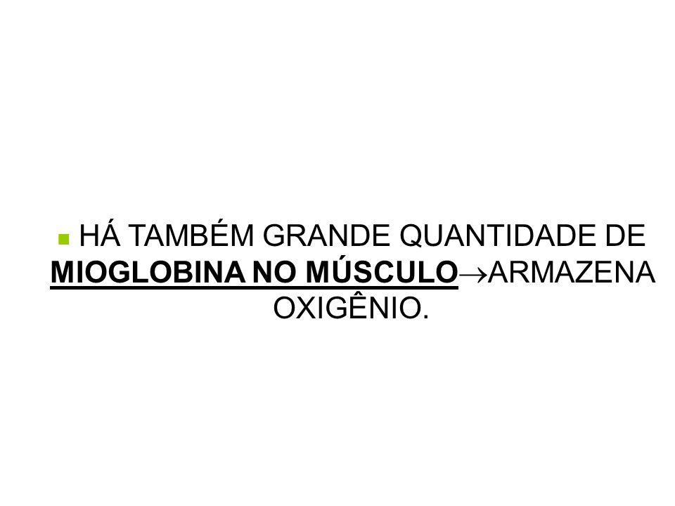 HÁ TAMBÉM GRANDE QUANTIDADE DE MIOGLOBINA NO MÚSCULOARMAZENA OXIGÊNIO.