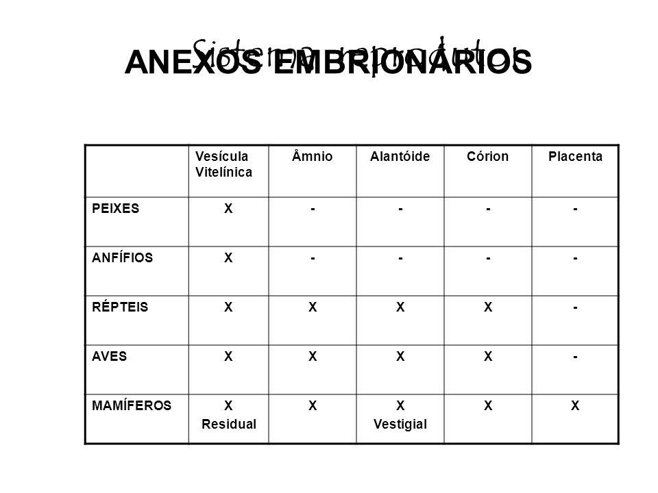 Sistema reprodutor ANEXOS EMBRIONÁRIOS Vesícula Vitelínica Âmnio