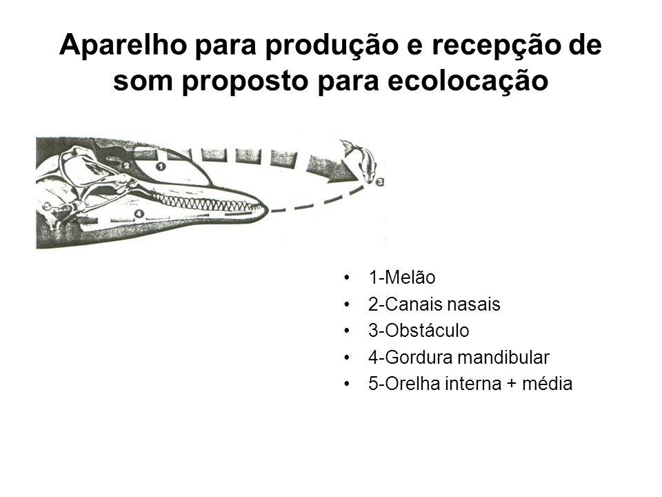 Aparelho para produção e recepção de som proposto para ecolocação