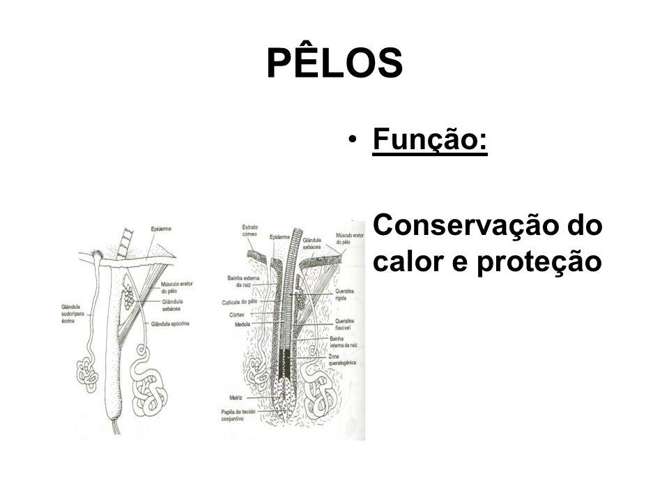 PÊLOS Função: Conservação do calor e proteção