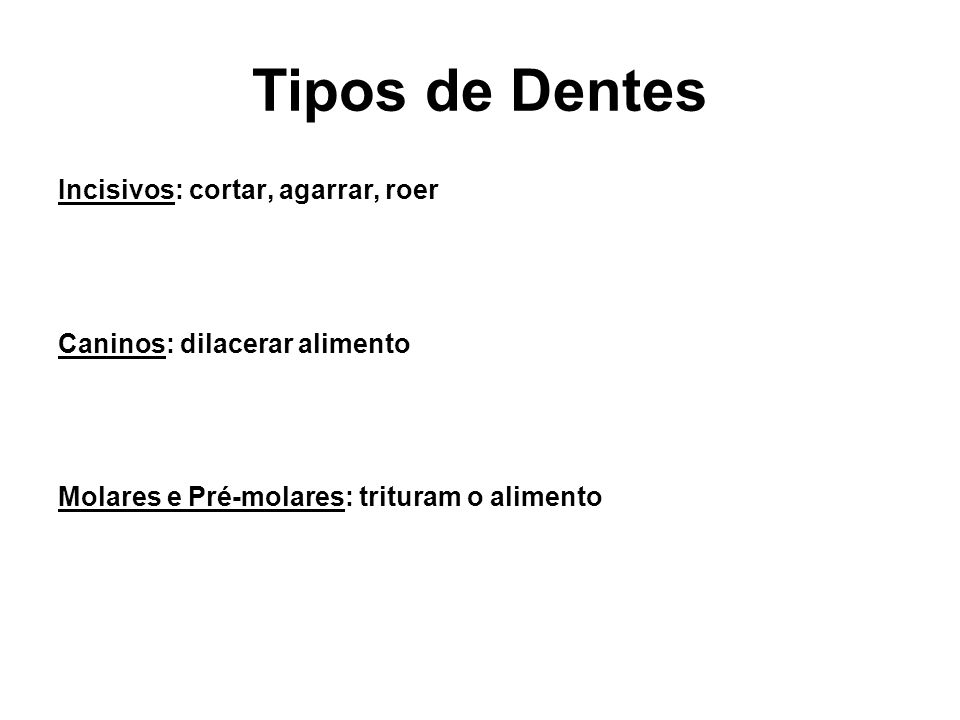 Tipos de Dentes Incisivos: cortar, agarrar, roer