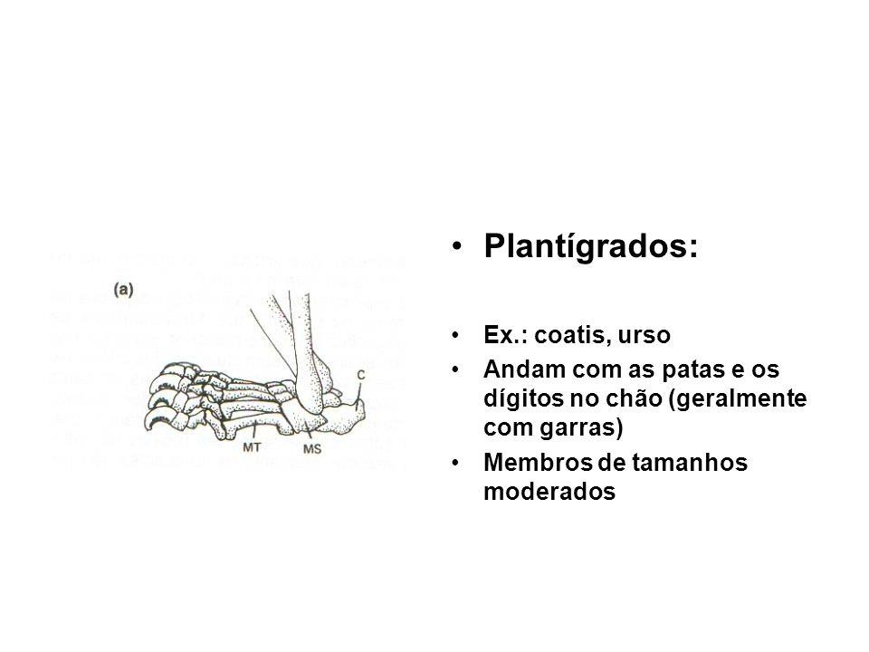 Plantígrados: Ex.: coatis, urso