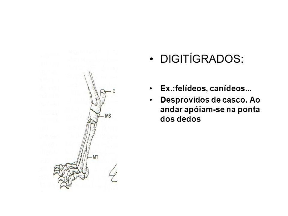 DIGITÍGRADOS: Ex.:felídeos, canídeos...