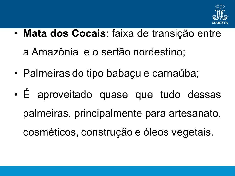 Mata dos Cocais: faixa de transição entre a Amazônia e o sertão nordestino;