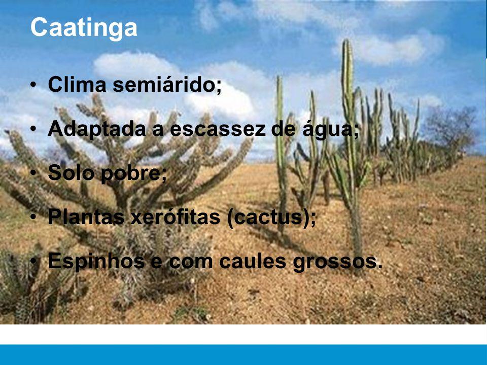 Caatinga Clima semiárido; Adaptada a escassez de água; Solo pobre;