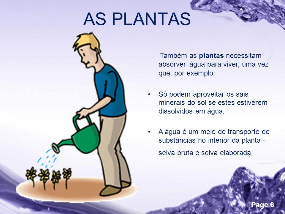AS PLANTAS Também as plantas necessitam absorver água para viver, uma vez que, por exemplo: