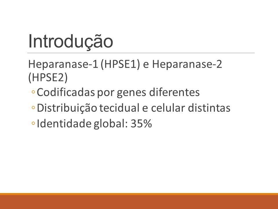 Introdução Heparanase-1 (HPSE1) e Heparanase-2 (HPSE2)