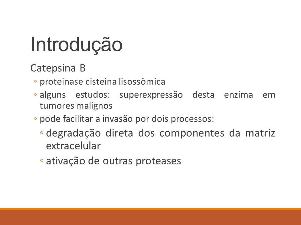 Introdução Catepsina B