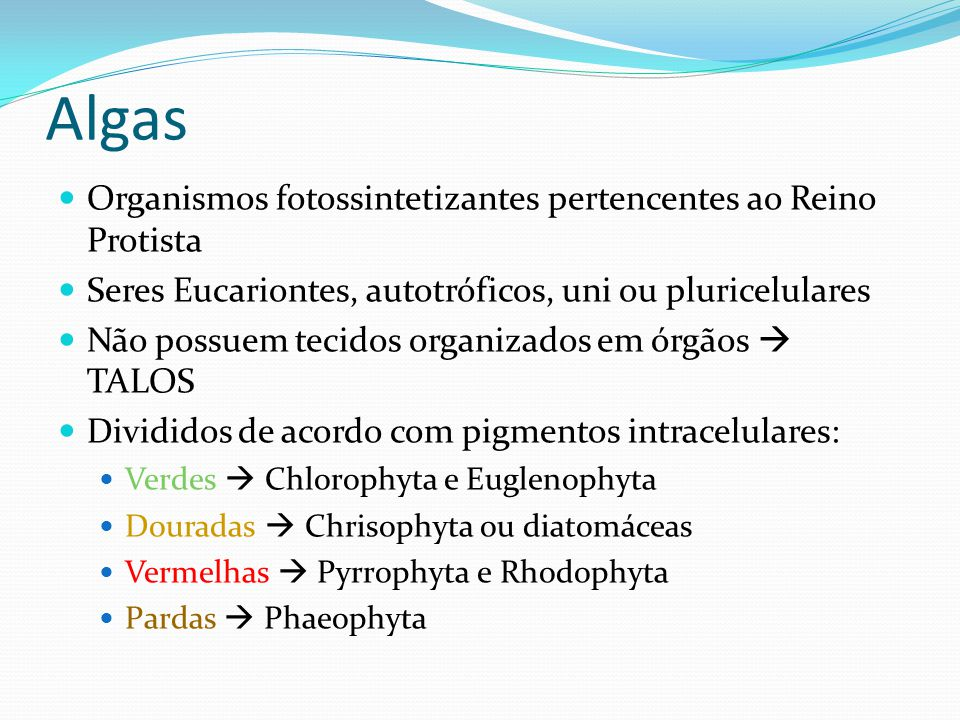 Algas Organismos fotossintetizantes pertencentes ao Reino Protista