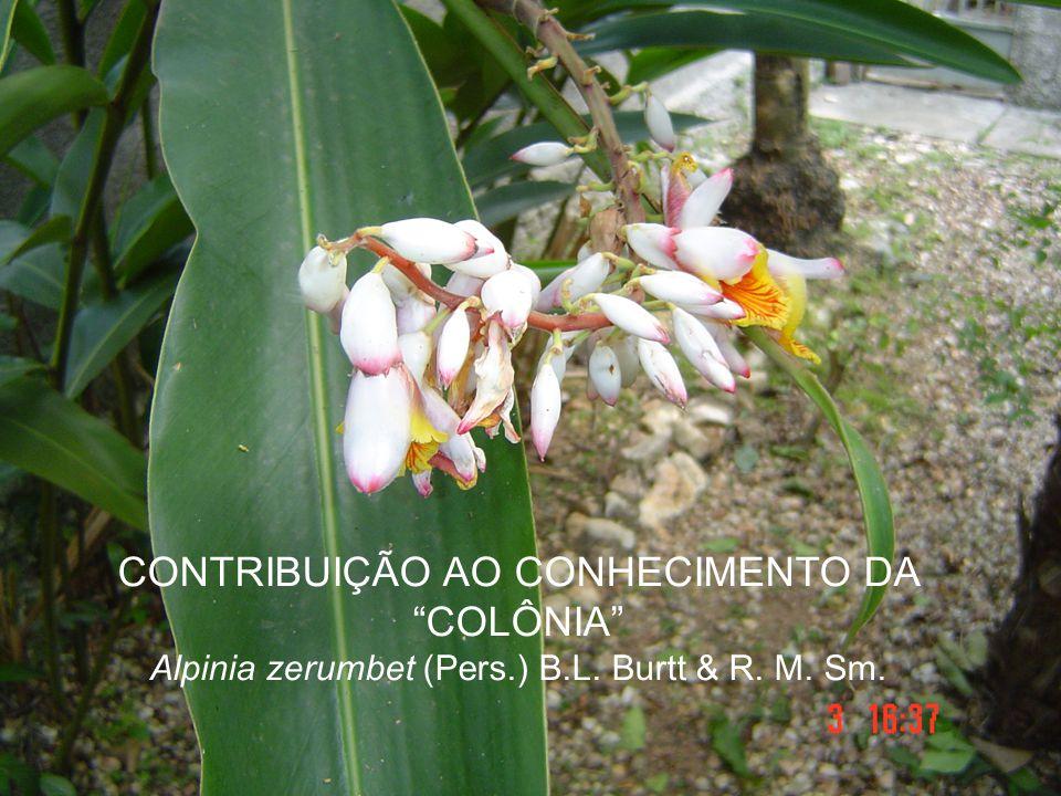 CONTRIBUIÇÃO AO CONHECIMENTO DA COLÔNIA Alpinia zerumbet (Pers. ) B