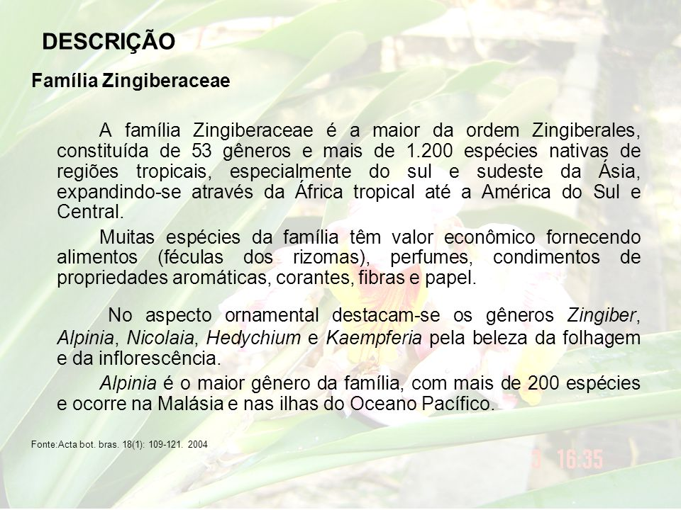 DESCRIÇÃO Família Zingiberaceae