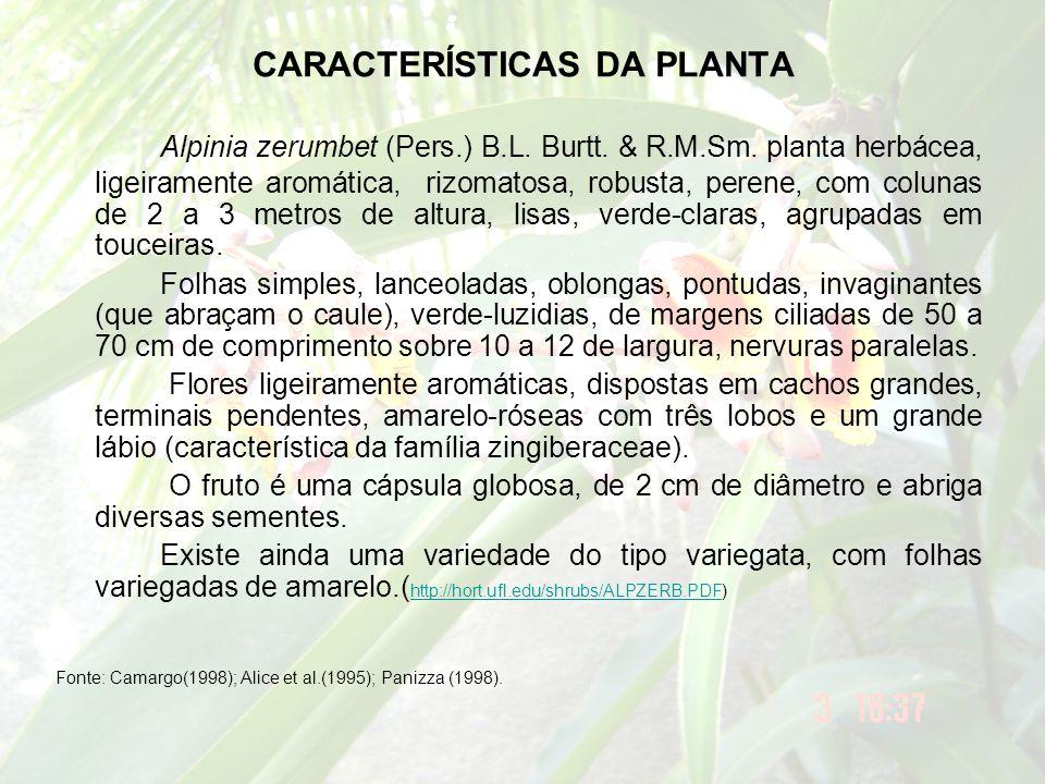 CARACTERÍSTICAS DA PLANTA