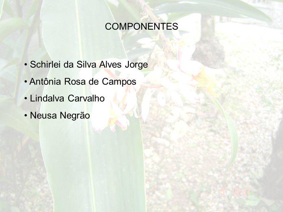 COMPONENTES Schirlei da Silva Alves Jorge Antônia Rosa de Campos Lindalva Carvalho Neusa Negrão