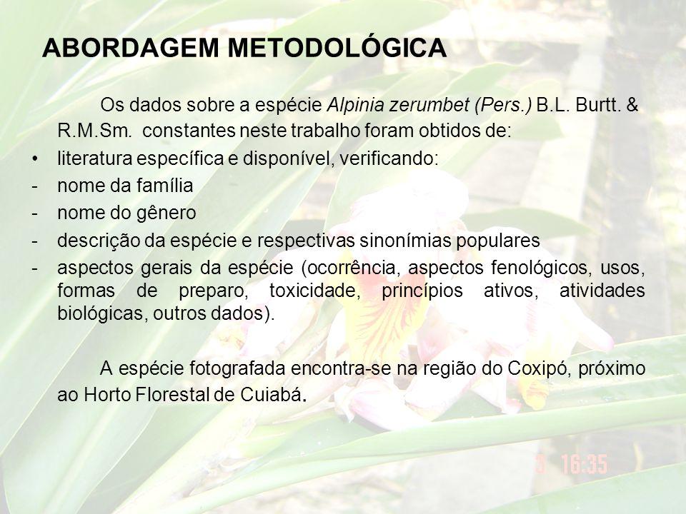 ABORDAGEM METODOLÓGICA