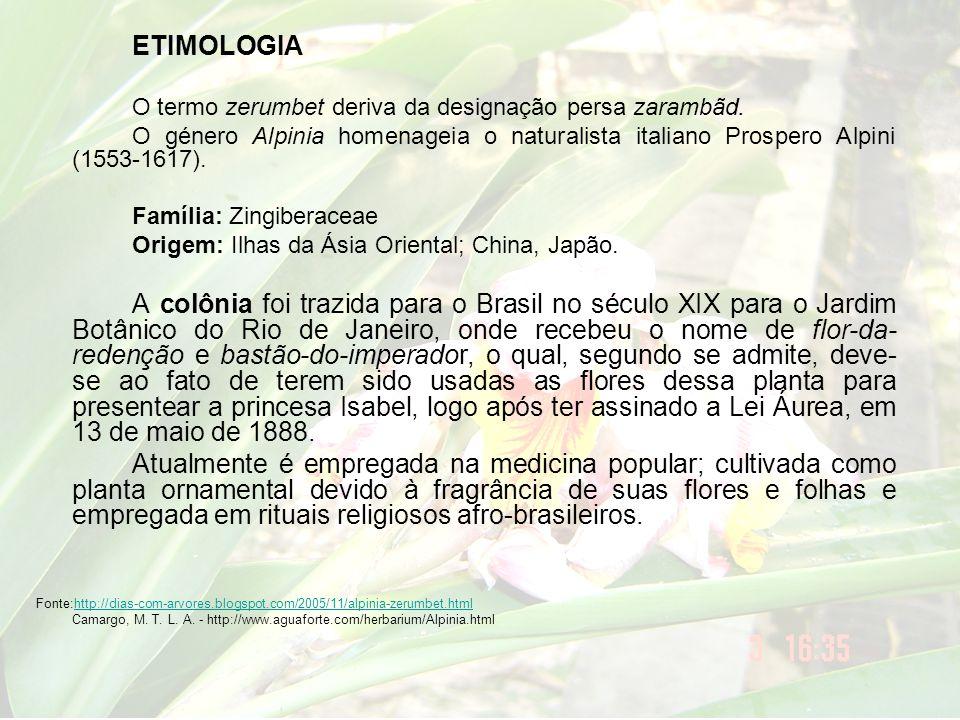 ETIMOLOGIA O termo zerumbet deriva da designação persa zarambãd. O género Alpinia homenageia o naturalista italiano Prospero Alpini (1553-1617).