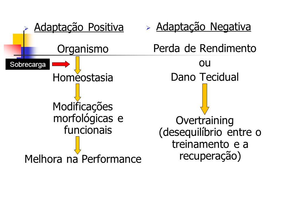 Modificações morfológicas e funcionais