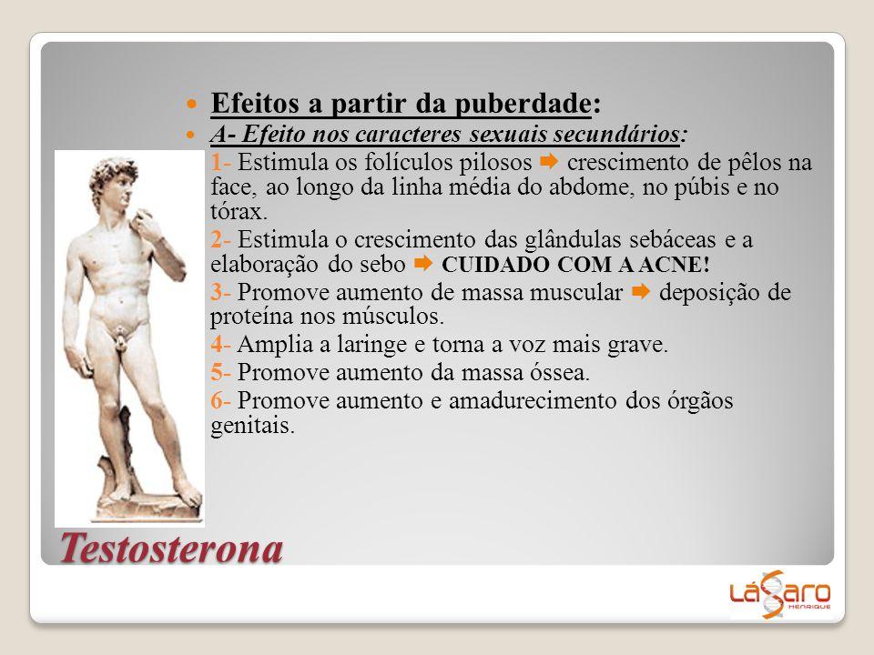 Testosterona Efeitos a partir da puberdade: