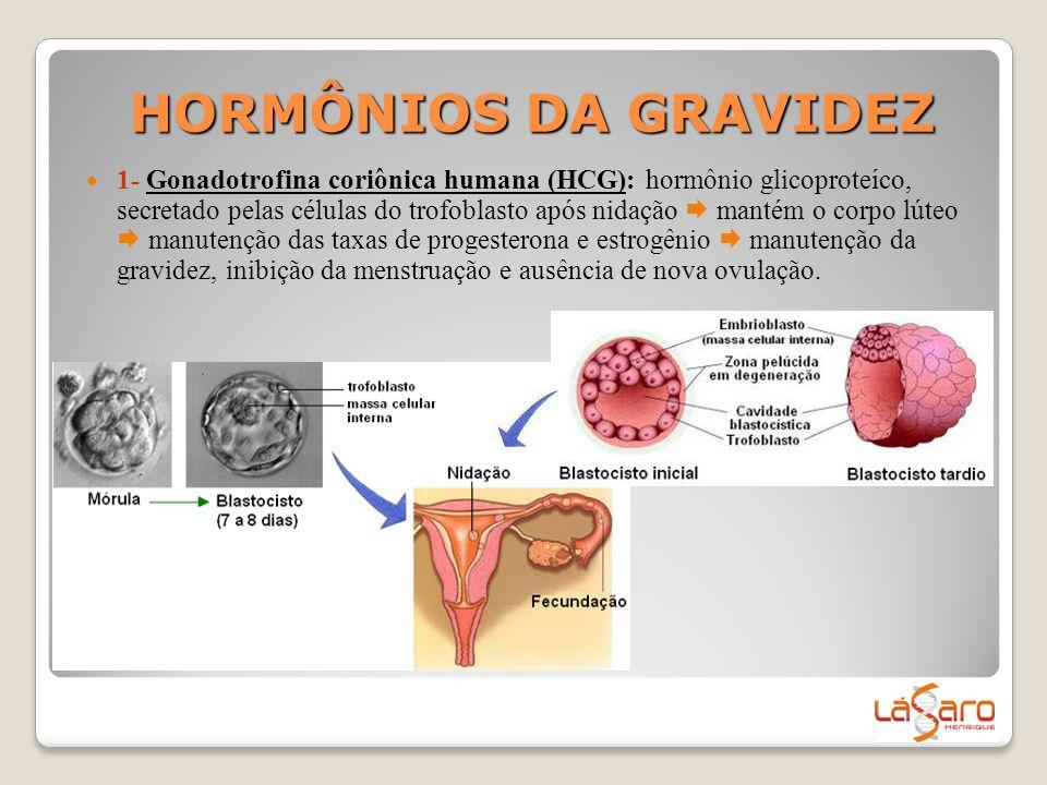 HORMÔNIOS DA GRAVIDEZ