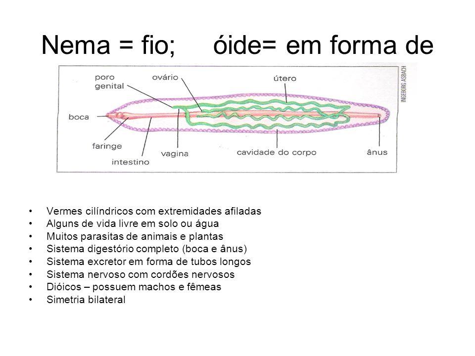 Nema = fio; óide= em forma de