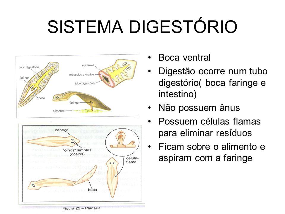 SISTEMA DIGESTÓRIO Boca ventral