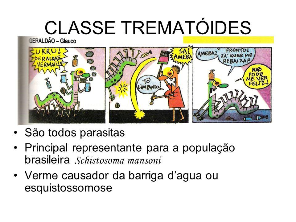 CLASSE TREMATÓIDES São todos parasitas