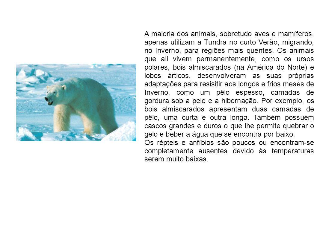 A maioria dos animais, sobretudo aves e mamíferos, apenas utilizam a Tundra no curto Verão, migrando, no Inverno, para regiões mais quentes. Os animais que ali vivem permanentemente, como os ursos polares, bois almiscarados (na América do Norte) e lobos árticos, desenvolveram as suas próprias adaptações para resisitir aos longos e frios meses de Inverno, como um pêlo espesso, camadas de gordura sob a pele e a hibernação. Por exemplo, os bois almiscarados apresentam duas camadas de pêlo, uma curta e outra longa. Também possuem cascos grandes e duros o que lhe permite quebrar o gelo e beber a água que se encontra por baixo.