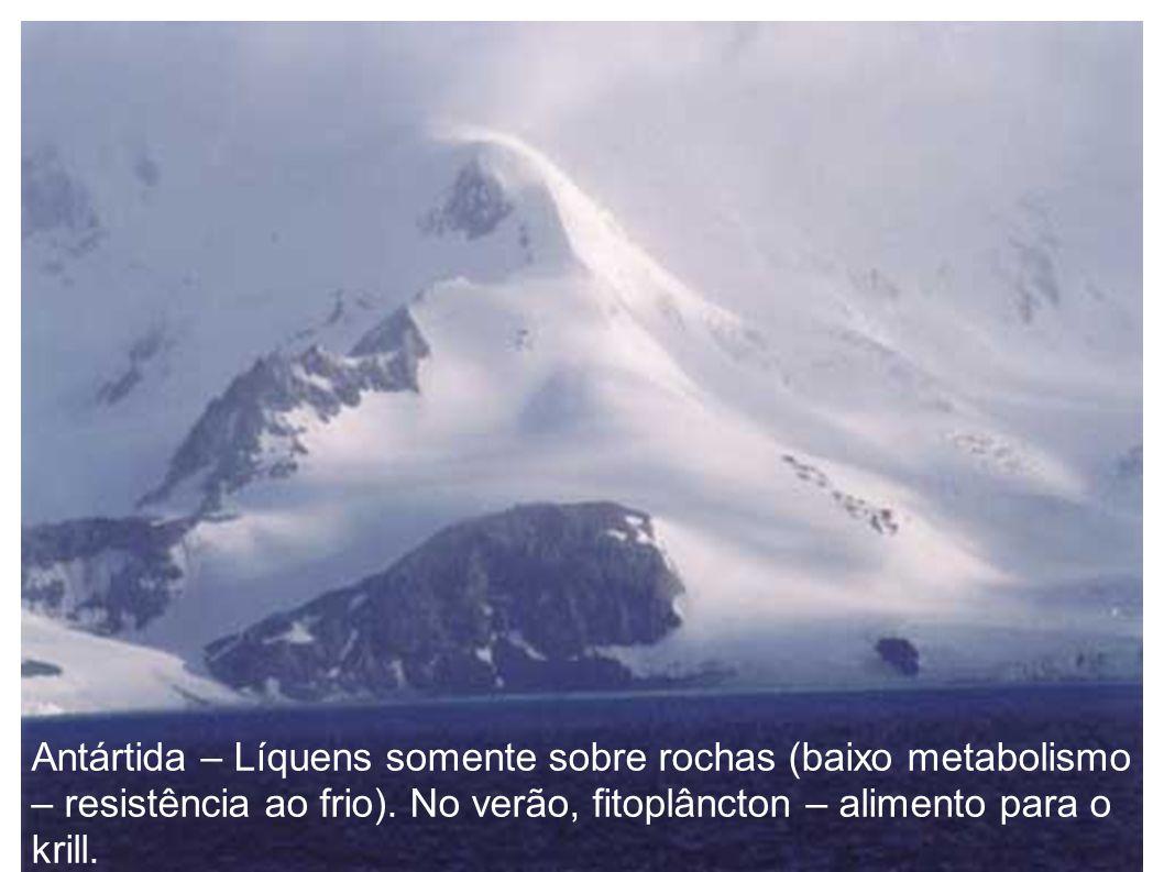 Antártida – Líquens somente sobre rochas (baixo metabolismo – resistência ao frio).