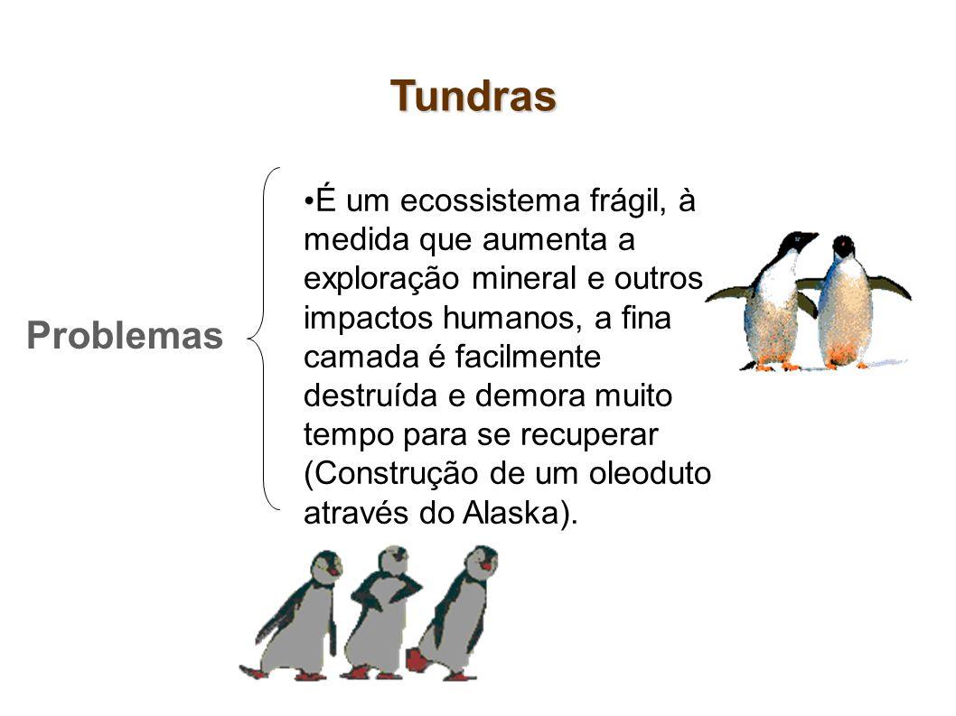 Tundras