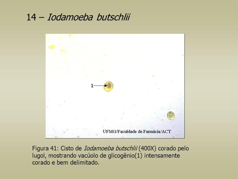 14 – Iodamoeba butschlii