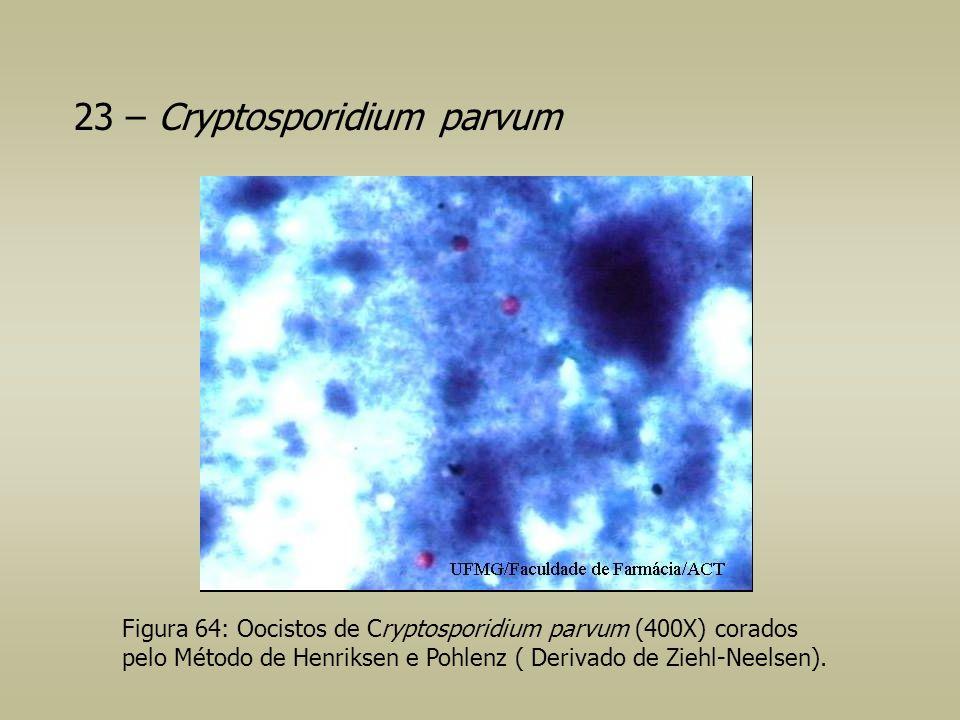 23 – Cryptosporidium parvum