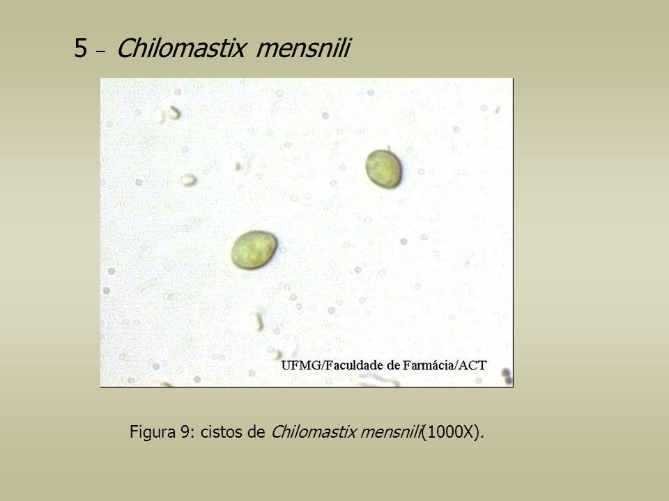 5 – Chilomastix mensnili