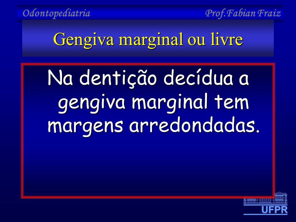 Gengiva marginal ou livre