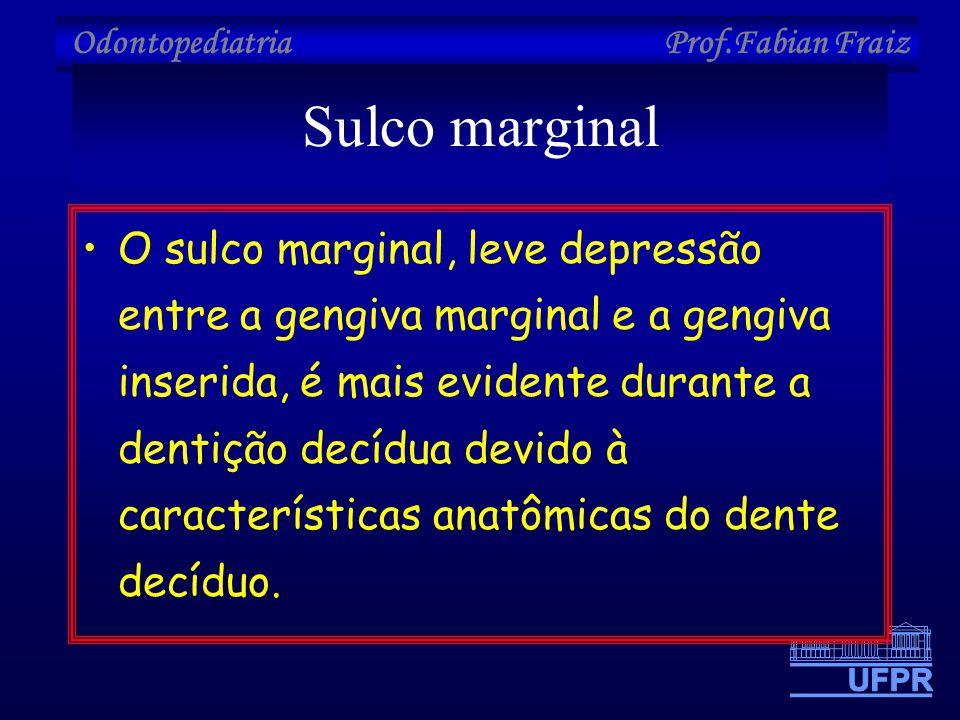 Sulco marginal