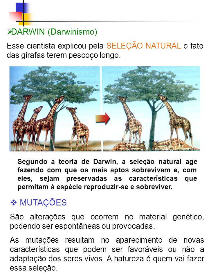 DARWIN (Darwinismo) MUTAÇÕES