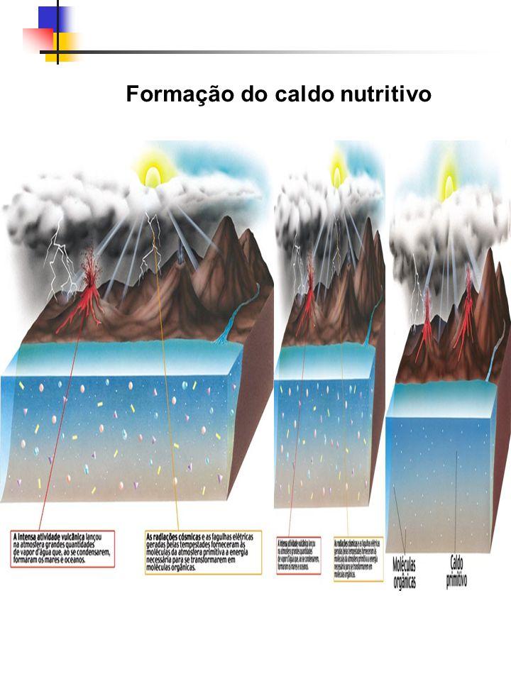 Formação do caldo nutritivo