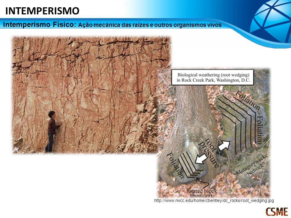 INTEMPERISMO Intemperismo Físico: Ação mecânica das raízes e outros organismos vivos.