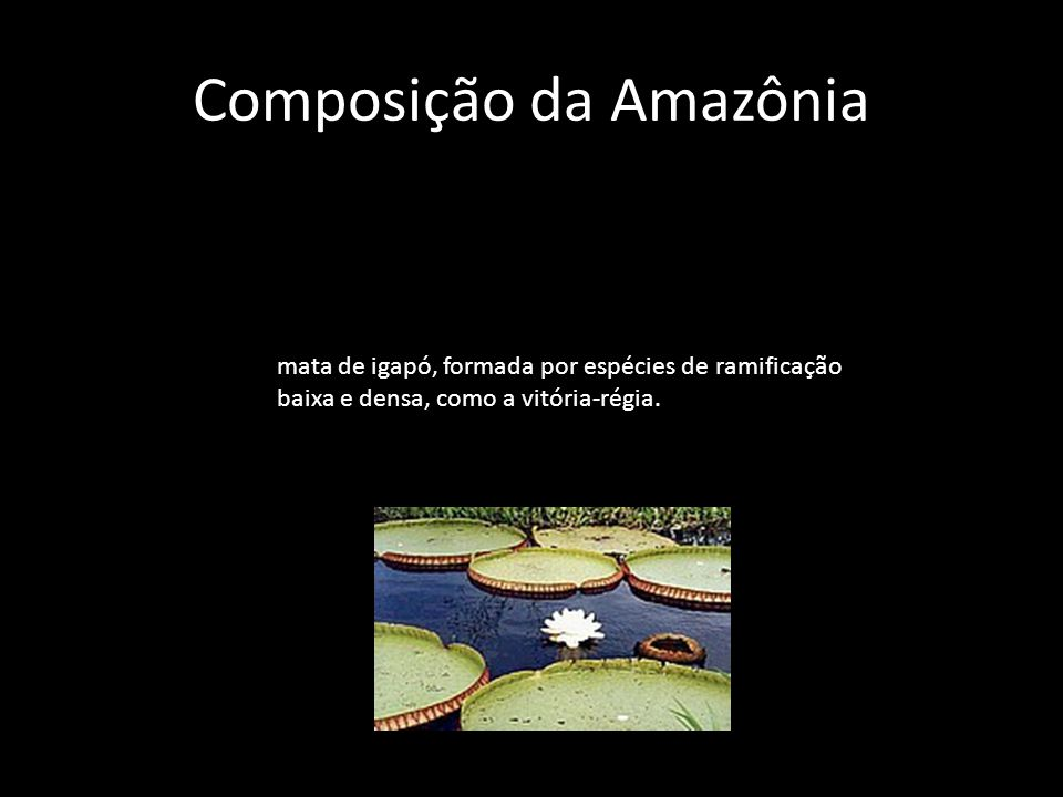 Composição da Amazônia