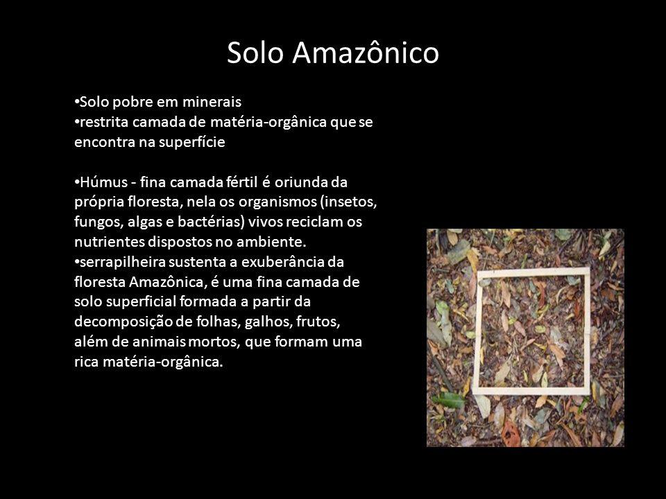 Solo Amazônico Solo pobre em minerais