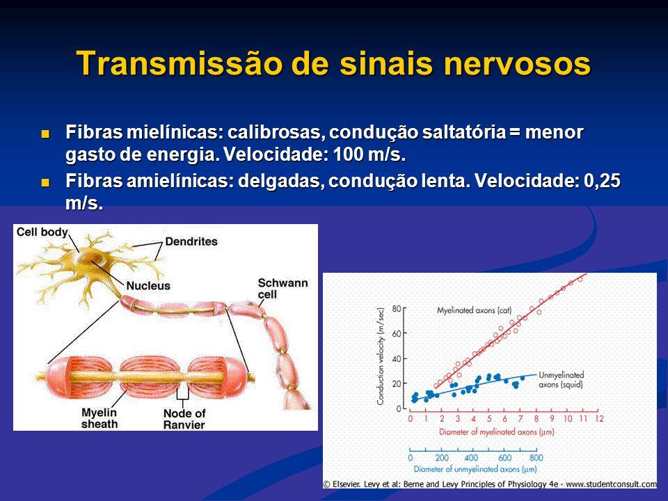 Transmissão de sinais nervosos