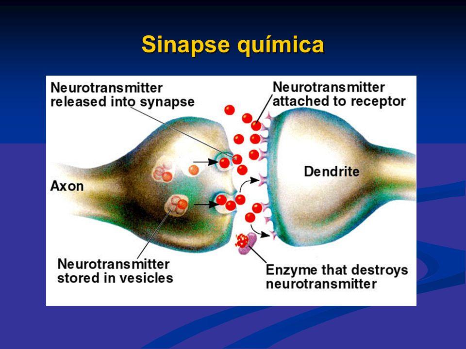 Sinapse química