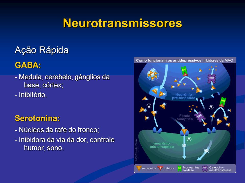 Neurotransmissores Ação Rápida GABA: Serotonina: