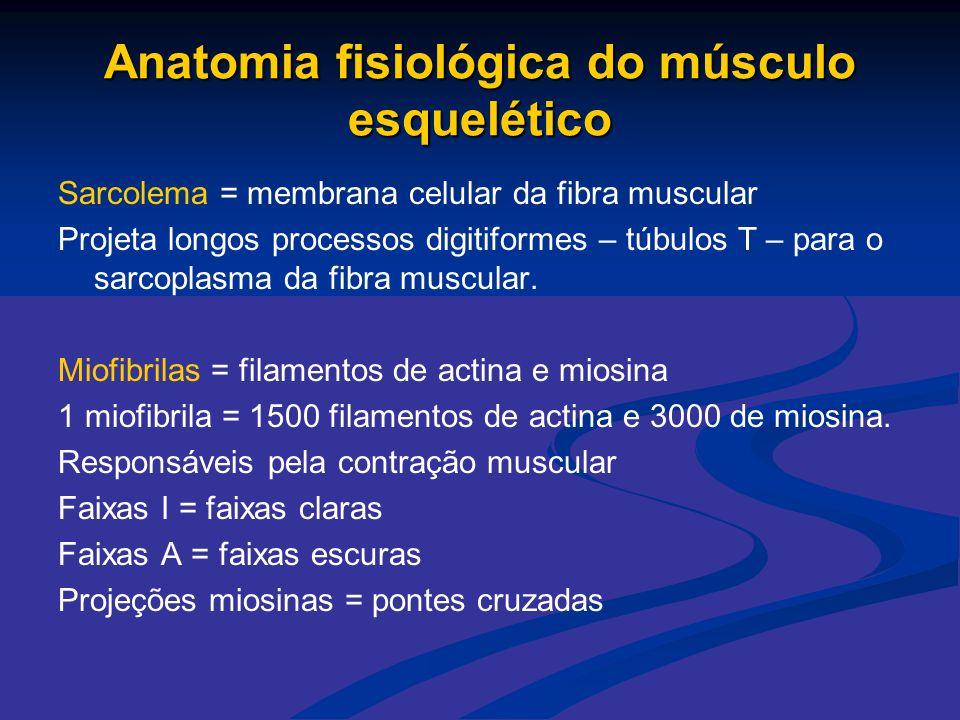 Anatomia fisiológica do músculo esquelético
