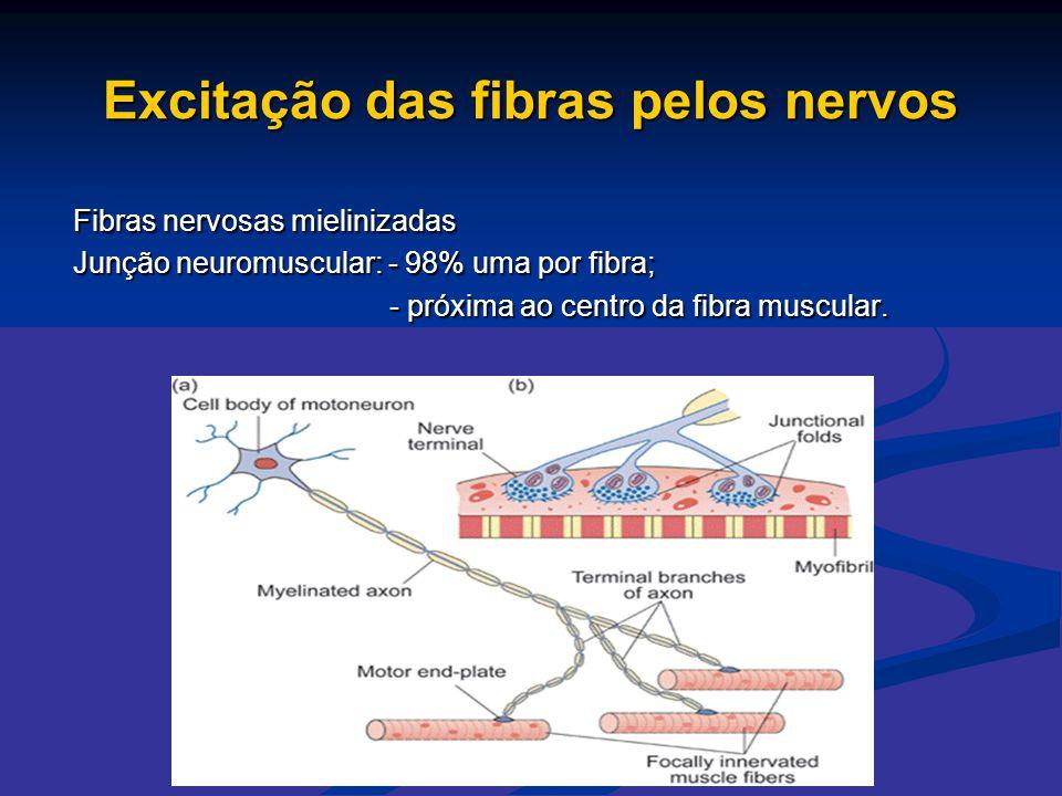 Excitação das fibras pelos nervos