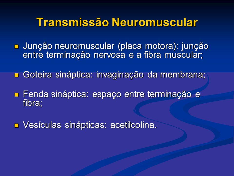 Transmissão Neuromuscular