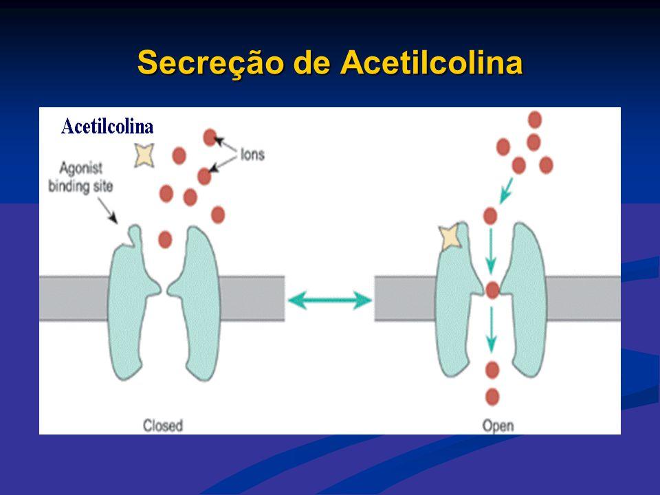 Secreção de Acetilcolina