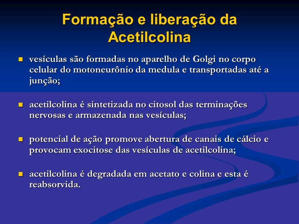 Formação e liberação da Acetilcolina