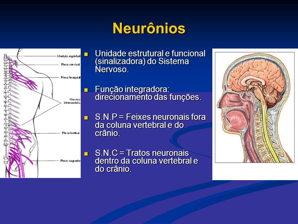 Neurônios Unidade estrutural e funcional (sinalizadora) do Sistema Nervoso. Função integradora: direcionamento das funções.