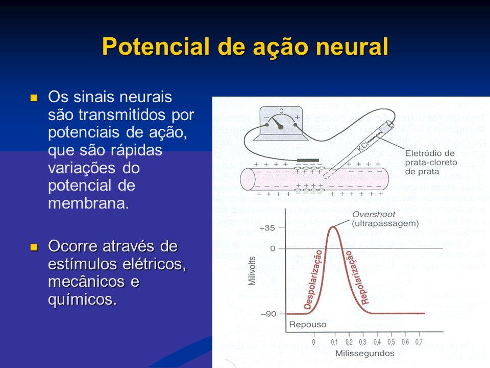 Potencial de ação neural